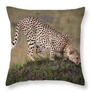Cheetah On Termite Mound Throw Pillow