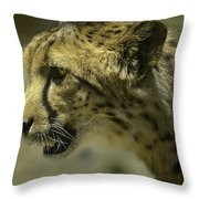 Cheetah On The Prowl Throw Pillow