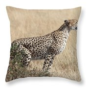 Cheetah Ready For The Off Throw Pillow