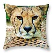 Cheetah Stare L Throw Pillow