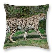 Cheetah Strolling Throw Pillow
