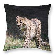 Cheetah Strutting Throw Pillow