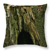 Cheetah Tree Perch Throw Pillow