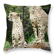 Cheetah's 02 Throw Pillow