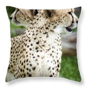 Cheetah's 04 Throw Pillow