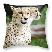 Cheetah's 05 Throw Pillow