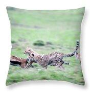 Cheetahs Acinonyx Jubatus Chasing Throw Pillow