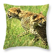 Cheetahs Running Throw Pillow
