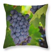 Chelan Blue Grapes Throw Pillow