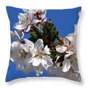 Cherry Blossom Blue Sky - 1 Throw Pillow