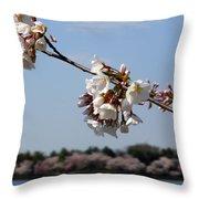 Cherry Blossom Dc Throw Pillow