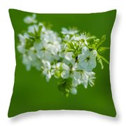 Cherry Blossom Featured 3 Throw Pillow