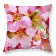 Cherry Blossom Special II Throw Pillow