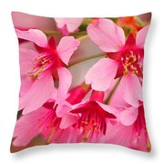 Cherry Blossom Special Throw Pillow