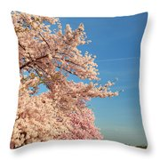 Cherry Blossoms 2013 - 014 Throw Pillow