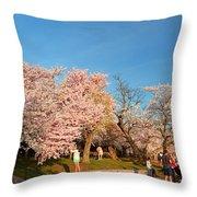 Cherry Blossoms 2013 - 015 Throw Pillow