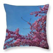 Cherry Blossoms 2013 - 037 Throw Pillow