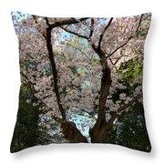Cherry Blossoms 2013 - 056 Throw Pillow