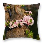 Cherry Blossoms 2013 - 064 Throw Pillow