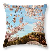 Cherry Blossoms 2013 - 089 Throw Pillow