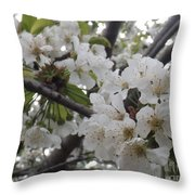Cherry Blossoms Branching Out Throw Pillow