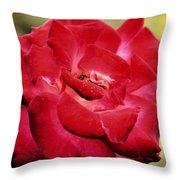 Cherry Cream Rose Throw Pillow