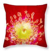 Cherry Pie Rose 03a Throw Pillow