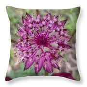 Cherry-queen Of The Prairie Flower Throw Pillow