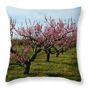 Cherry Trees Throw Pillow