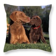 Chesapeake Bay Retrievers Throw Pillow