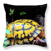 Chesapeake Box Turtle Throw Pillow