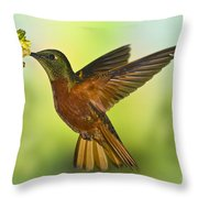 Chestnut-breasted Coronet Throw Pillow