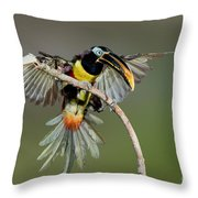 Chestnut-eared Aracari Just Landed Throw Pillow