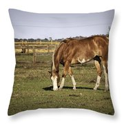 Chestnut In The Pasture Throw Pillow