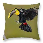 Chestnut-mandibled Toucan Landing Throw Pillow