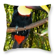 Chestnut Mandibled Toucan Throw Pillow
