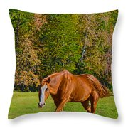 Chestnut Red Horse Throw Pillow