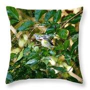 Chestnut-sided In Sprinkler Throw Pillow