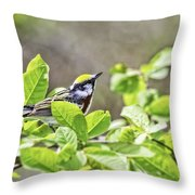 Chestnut Sided Warbler Throw Pillow