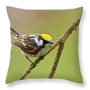 Chestnut-sided Warbler Pictures 49 Throw Pillow
