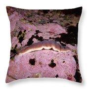 Chevron Amphiporus Throw Pillow
