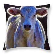 Chiaroscuro Calf Throw Pillow