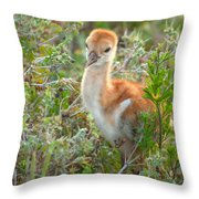 Chick 107 Throw Pillow