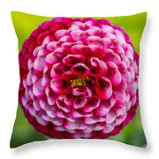 Chick A Dee Dahlia Throw Pillow