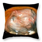 Chick Embryo On 17th Day Throw Pillow by Jerome Wexler