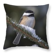 Chickadee On The Spruce Throw Pillow