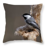Chickadee Pictures 261 Throw Pillow