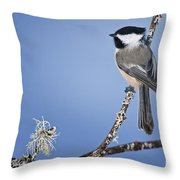 Chickadee Pictures 409 Throw Pillow