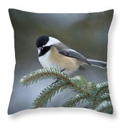 Chickadee Pictures 521 Throw Pillow