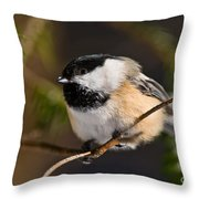 Chickadee Pictures 561 Throw Pillow